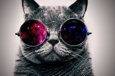 إنقاذ قطة شرودنجر القفزة الكمية المستوى الكمي الانظمة الكمومية التراكب الكمي الكيوبيت عداد غايغر شرح تجربة قطة شرودنجر الجسيمات دون الذرية