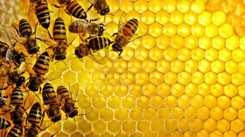 بإمكان النحل فهم مُصطلحات رياضيّة مُعقدة بشكل مذهل!