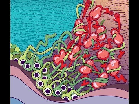 ماذا يحصل عند الاستسلام ما الذي يحصل في دماغنا عند الاستسلام أهم النواقل العصبية في الدماغ مركز المكافأة في الدماغ الناقل العصبي للسرور