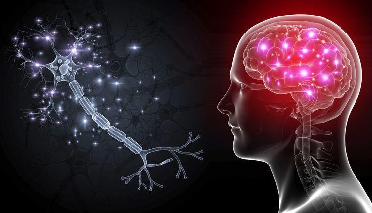 وجد العلماء الطريقة التي تستطيع الخلايا العصبية خلالها نقل المعلومات إلى عدة أجيال