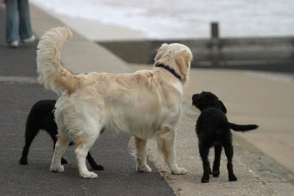 العلم يجيب: لماذا تهز الكلاب ذيولها؟