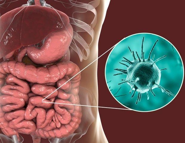 داء الأميبات: الأسباب والأعراض والتشخيص والعلاج العدوى الأميبية الأمعاء الطفيليات طفيلي المتحولة الحالة للنسج آلام المعدة تقلص البطن