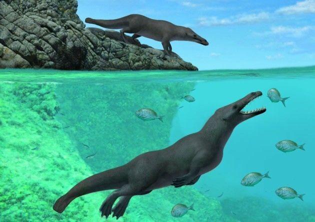أقدم الحيتان المكتشفة في السنغال كانت تستخدم أيديها للسباحة تاريخ الحيتان التطوري التاريخ التطوري للحيتان الثدييات رباعيات الأرجل