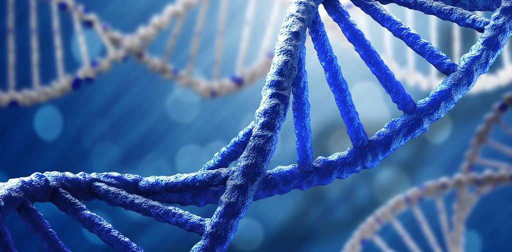 الحمض النووي، ماهيته، هيكله، واكتشافه