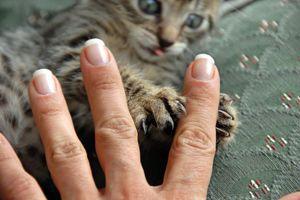 أعراض داء خدش القطط علاج داء خدش القطط الأسباب والأعراض والتشخيص والعلاج القطط المصابة بالبراغيث البراغيث الناقلة للعدوى المخالب