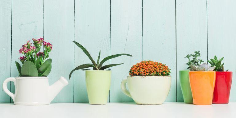 أخطر النباتات في العالم التي سترغمك على البقاء في منزلك للأبد