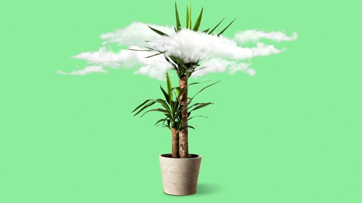 هل تنقي النباتات المنزلية الهواء في بيتك؟