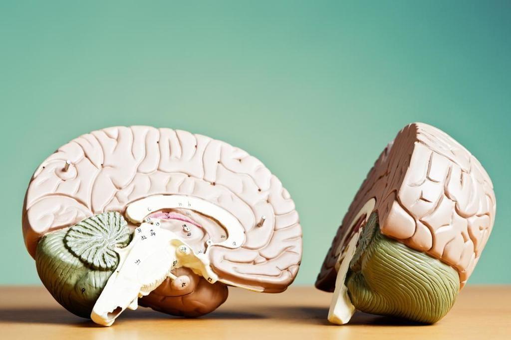 الدماغ الأيمن والدماغ الأيسر.. من المسيطر؟