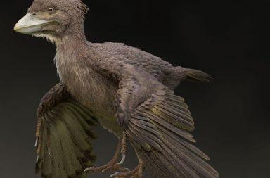 اكتشاف أحفورة تمثل حلقة وصل بين الديناصورات والطيور العصر الطباشيري (الكريتاسي Cretaceous) العصر الجوراسي علاقة الطيور بالديناصورات