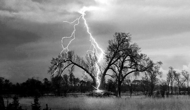 ماذا يحدث عندما يضرب البرق شجرة؟