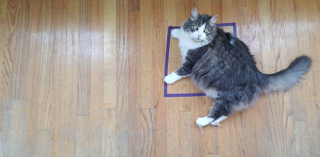 لماذا لا تستطيع القطط التفكير خارج الصندوق؟