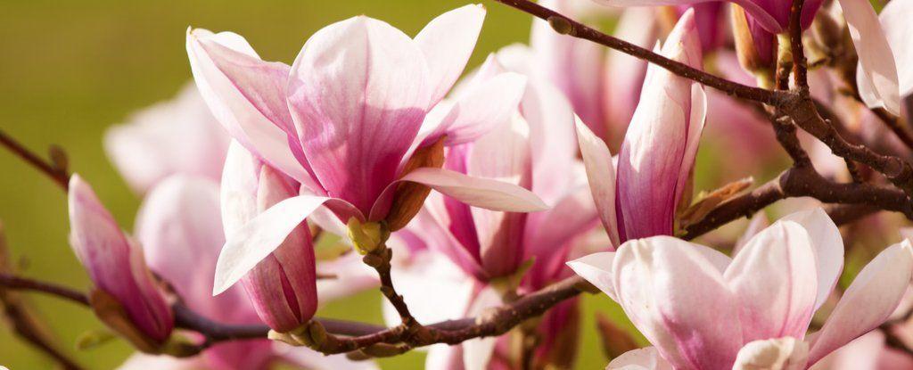 وأخيرًا، أصبحنا نعرف شكل أول زهرة على الأرض