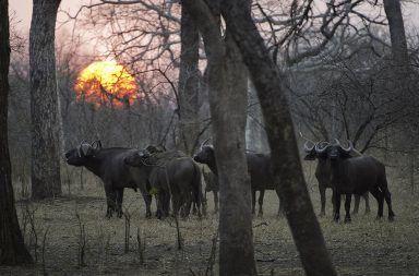 تاريخ المحميات الطبيعية حماية التنوع الحيوي المتبقي في الحياة البرية التنوع الحيوي النباتي والحيواني المستنقعات الجبال المروج الغابات القديمة