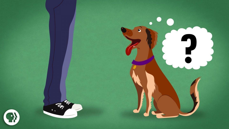 هل تستطيع الحيوانات فهم لغة البشر؟