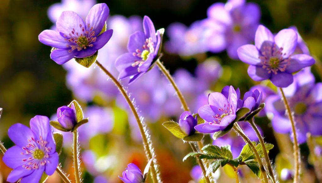ما هي أجزاء الزهرة ؟