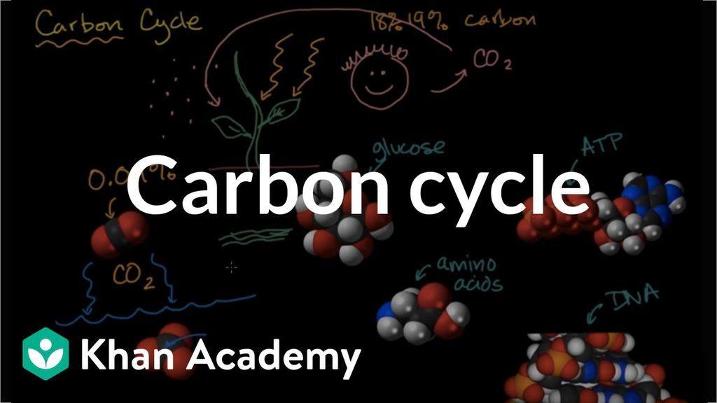 دورة الكربون في الطبيعة: شرح مفصل بالصور