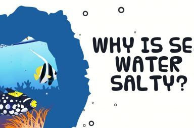 ما سبب ملوحة مياه البحر دورة المياه انتقال الماء من الأمطار إلى الينابيع المياه الجوفية لماذا طعم ماء البحر مالح كيف ينتقل الماء من الأنهار إلى المحيطات