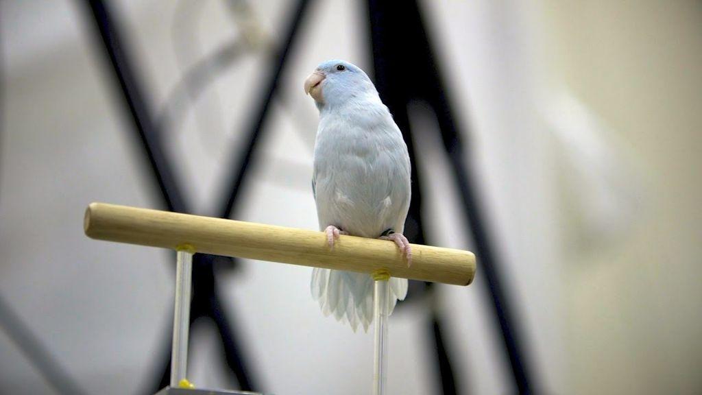 طريقة جديدة لتسجيل رحلات الطيور بتقنية التصوير ثلاثي الأبعاد