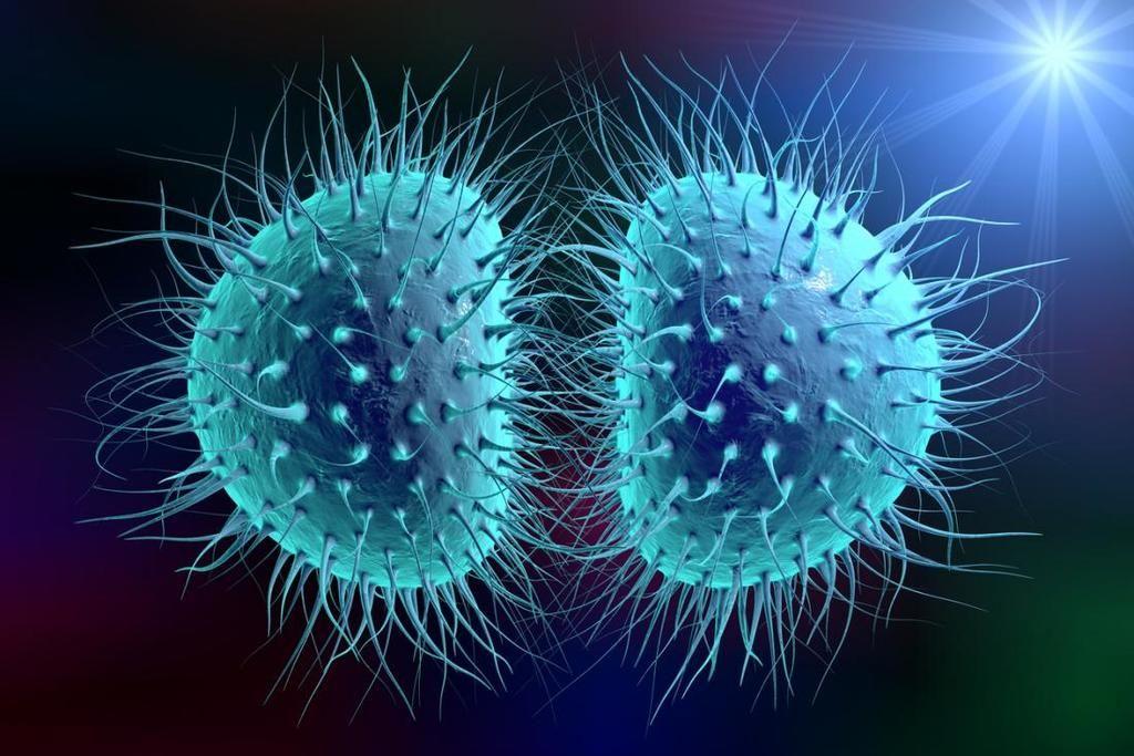 التهاب السحايا البكتيري Bacterial Meningitis