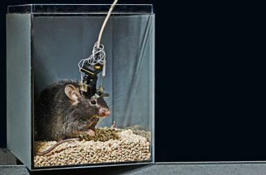 لماذا لا تنجح الدراسات المجراة على أدمغة الفئران في إعطاء فهم أفضل للدماغ البشري؟ - لماذا يجري العلماء اختبارات على أدمعة القوارض؟