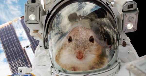 عشرون فأرًا يسافرون إلى الفضاء لمساعدتنا في معرفة كيفية النجاة على سطح المريخ