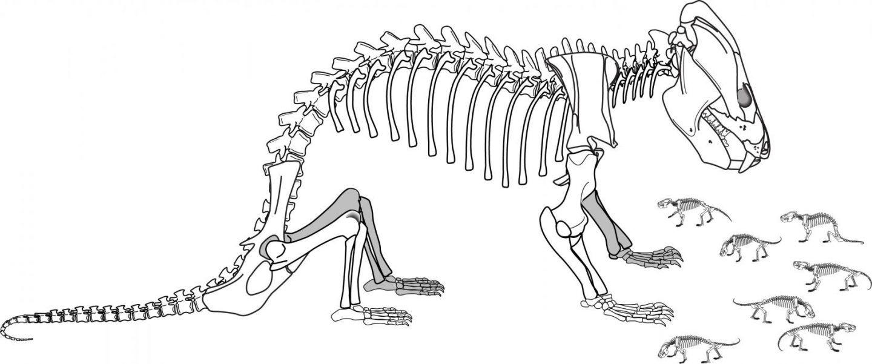 أحفورةٌ لحيوانٍ ثدييّ منقرض تُلقي الضوء على تطور الدماغ