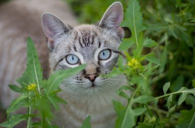 مملكة الحيوان المملكة الحيوانية الحيوانات تصنيف الحيوانات انفجار العصر الكامبري الشعب الحيوانية شعبة حيوانية حقيقية النواة