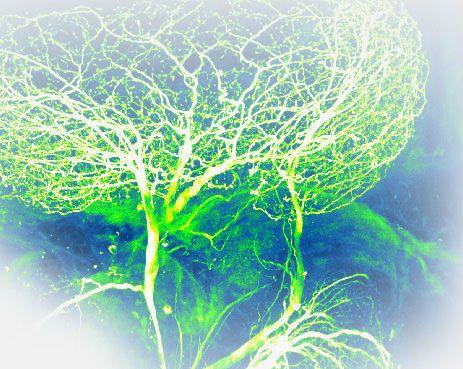 ما هي الفيزياء الحيوية كيف تعمل الأنظمة الحيوية دراسة الأحياء آلية تشكل الجزيئات الحيوية دراسة الأنظمة الحيوية وفهم طريقة عملها