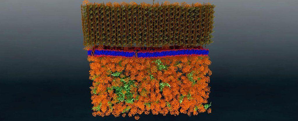 لأول مرة: صورة نانوية لغشاء خلية حية