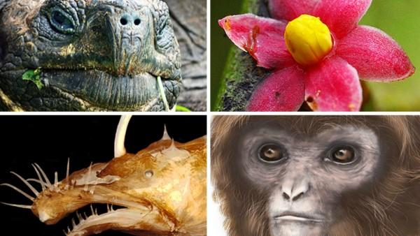 لائحة تضمّ 10 كائنات جديدة تم اكتشافها للعام 2016