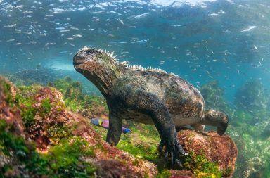 جزر غالاباغوس: مختبر التطور الطبيعي الجزر التي أقام عليها داروين أبحاثه الجزيرة التي قام داروين فيها بدراسة تطور الكائنات الحية