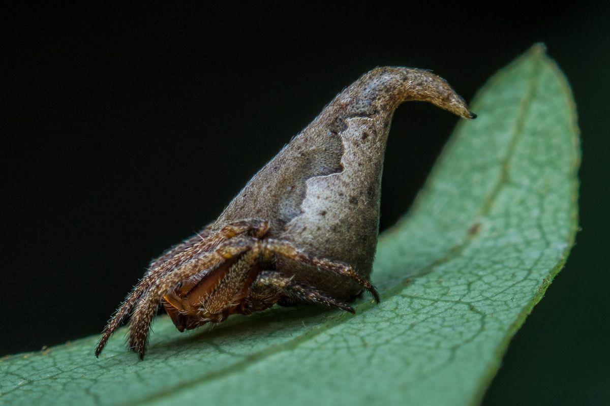 اذا كنت من معجبي « هاري بوتر » ، فهذا العنكبوت قد يهمك !