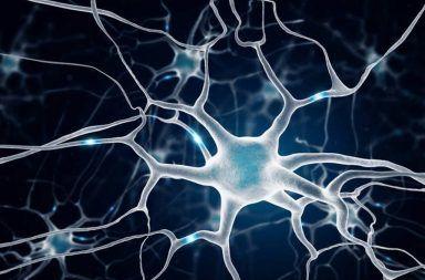 منبر البحوث المتخصصة والدراسات العلمية  يشاهده  23456 زائر Noral-terapinin-faydalar%C4%B1-384x253