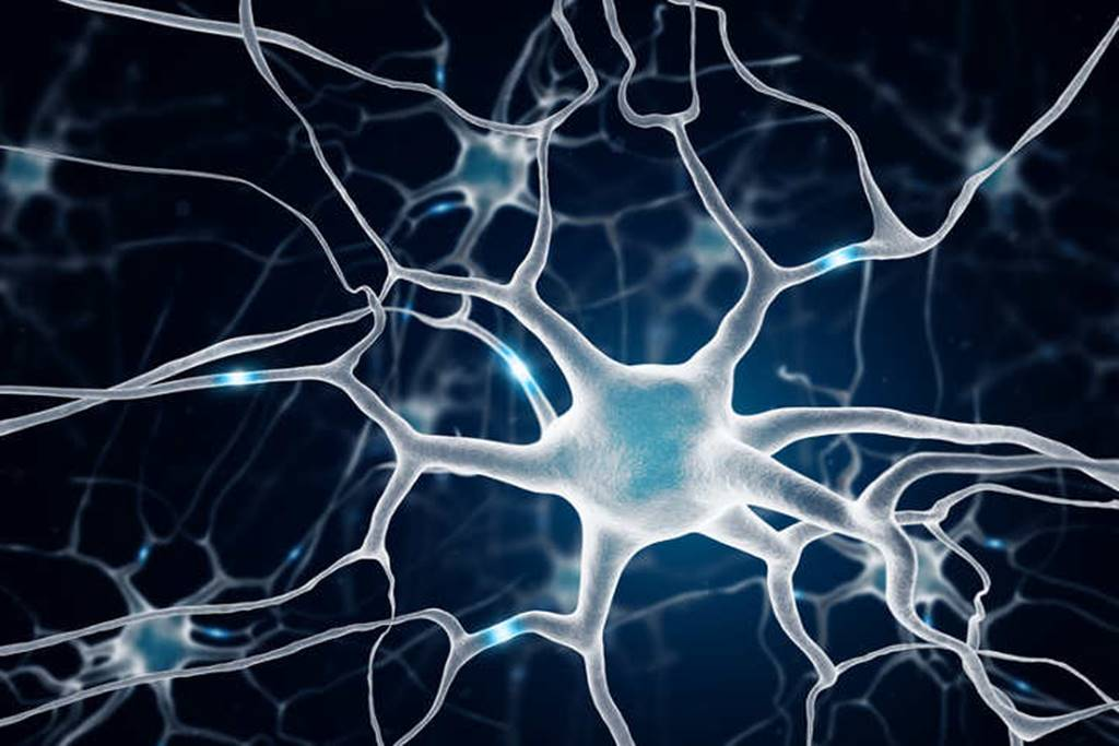 دارةٌ عصبيةٌ بين الأمعاء والدماغ تثبت أنّ العصب المُبهم مكوّنٌ أساسيّ لدارات التحفيز والثواب في الدماغ