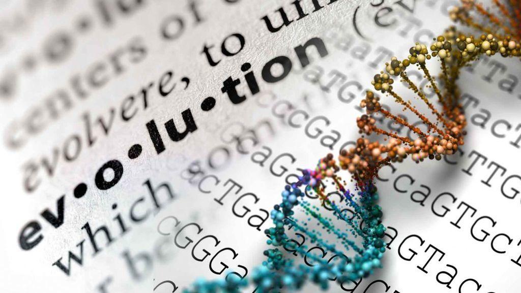 مستوى الدعم الذي تحظى به نظرية التطور في المؤسسات العلمية والأكاديمية
