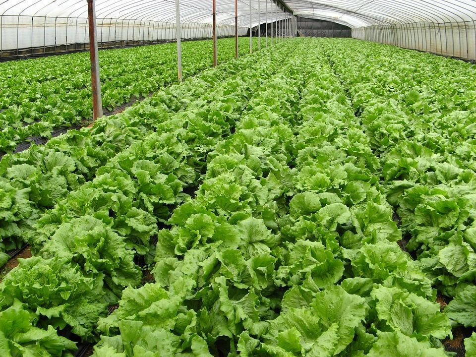 What is organic farming history and methods and what is the difference between organic and inorganic crops, biological fertilizers, pesticides, animal waste, plant waste