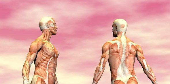 ما هو النسيج العضلي ؟