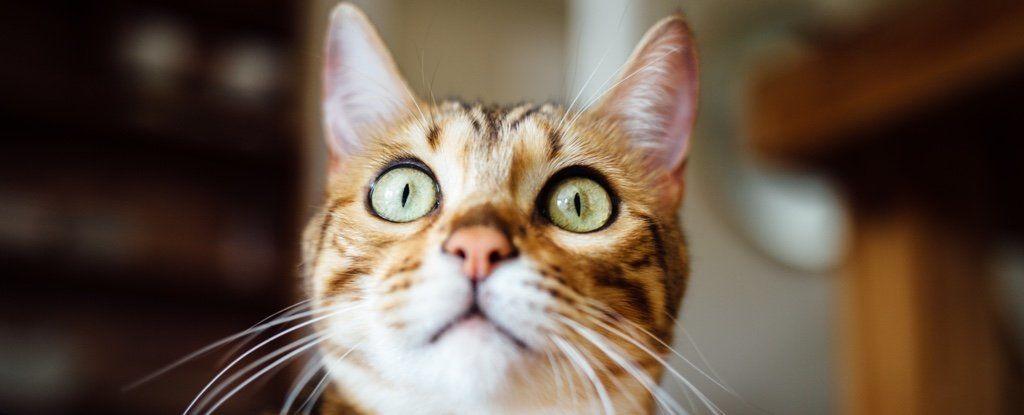صلة غريبة بين القطط ورواد الأعمال!