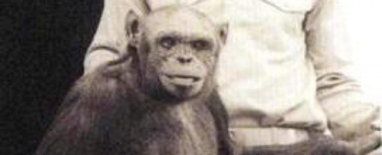 لقد خلقنا كائنا هجينًا بين الإنسان والشيمبانزي منذ 100 عام! هذا ما أعلنه أحد العلماء