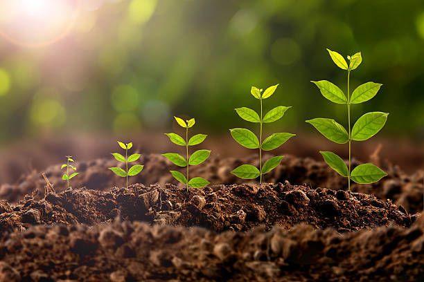 النباتات الضوء المياء التركيب الضوئي