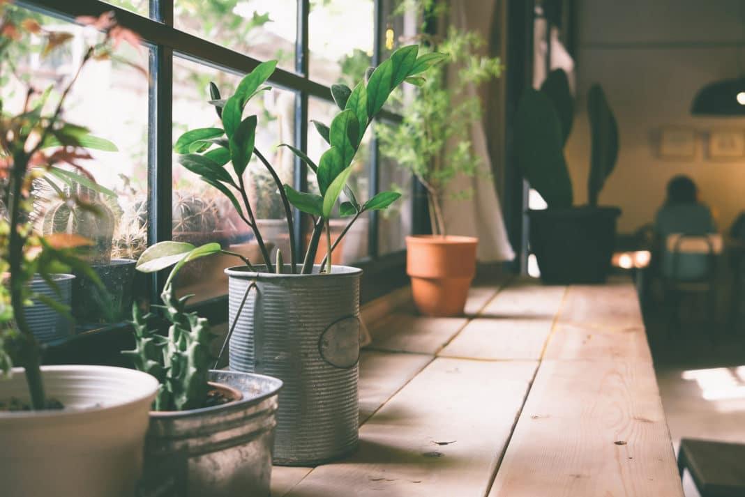 هل تنقي النباتات المنزلية الهواء في بيتك؟ - تؤكد مراجعة ضخمة أن النباتات لا تنقي الهواء في منزلك - ما فائدة وجود النباتات في المنزل