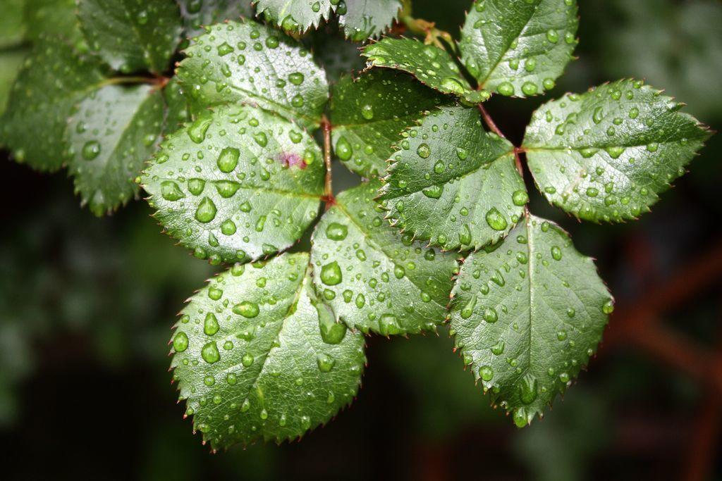 أظهرت دراسة جديدة أن النباتات تصاب بالذعر أثناء المطر الأرض مبللة بالمطر إلى جانب أشعة الشمس والقليل من ثاني أكسيد الكربون