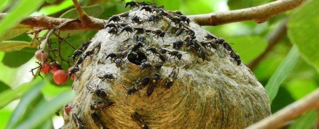 العلماء في معهد ماسشوستس يستخدمون سم الدبور في المضادات الحيوية