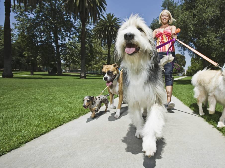الكلاب وحبها موجود في الجينات لماذا نحب الكلاب الحمض النووي لدى الإنسان وعلاقته بالكلاب التنبؤات الجينية للحمض النووي البشري