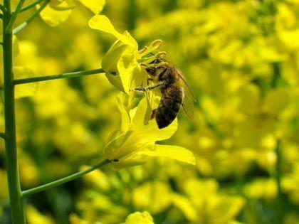 التكاثر في النباتات: ما هي أنواع التكاثر عند النباتات وكيف يتم كل منها التكاثر الجنسي والتكاثر اللاجنسي عند النباتات الأبواغ المياسم حبات الطلع