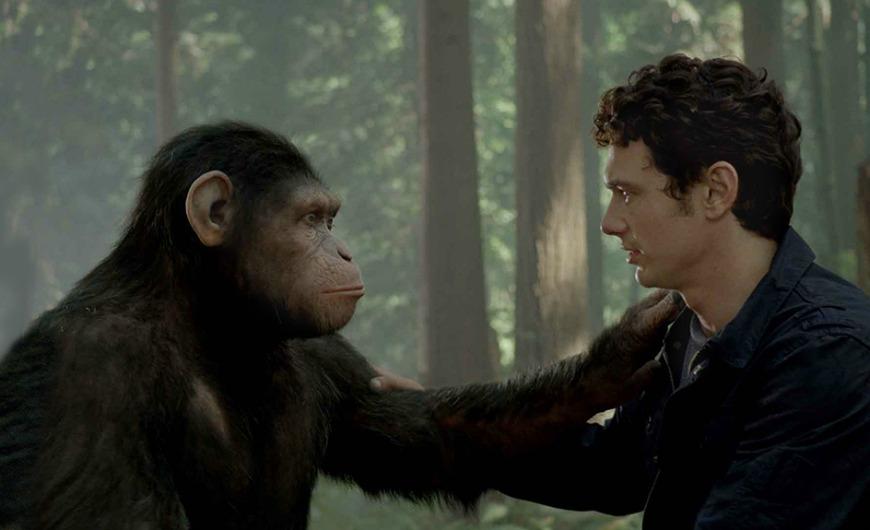 القردة قادرة على فهم ما يدور في اذهاننا !