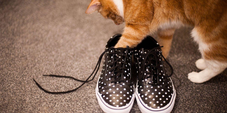 العلم العجيب وراء انحلال رباط حذاءك قد تم حلّه أخيرًا