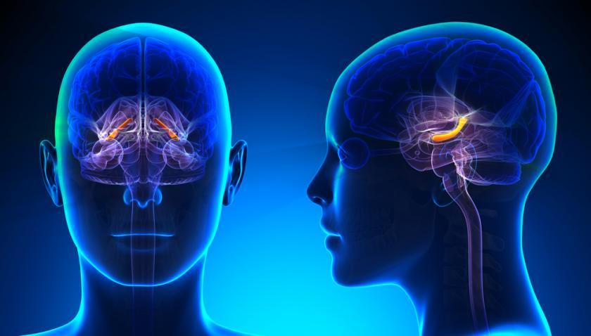 الدماغ يعيد استشارة نفسه قبل اتخاذ أي قرار
