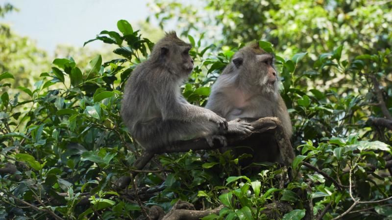 أصبح بإمكان التعديل الجيني خفض نسبة الكوليسترول لدى الحيوانات الكبيرة، مما يضع الأساسات التجريبية للبشر