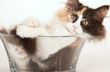 كانت القطط تأخذ الإناء الذي